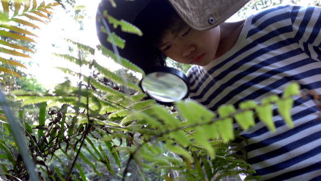 vídeos de stock e filmes b-roll de young botanist looking plant magnifying glass - lupa
