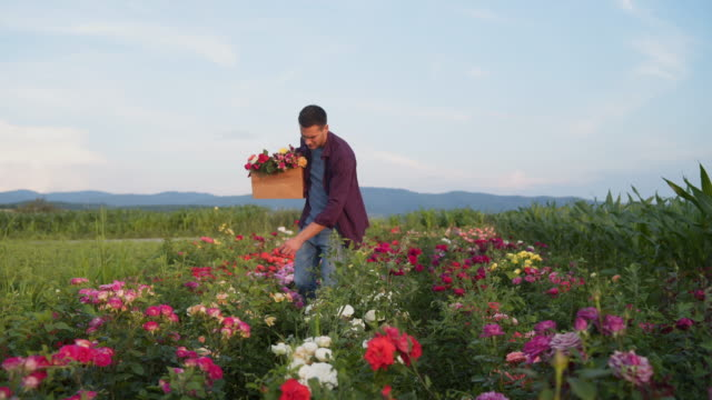 Young botanist working on flower farm