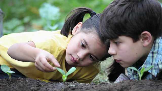 vídeos de stock e filmes b-roll de young boy and girl watching and touching seedling in garden - espalhar
