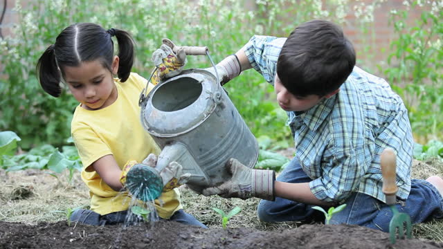young boy and girl watering seedlings in garden with watering can - sowing stock videos & royalty-free footage