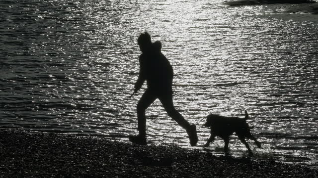 a young boy and his dog running along the seashore. - one boy only stock videos & royalty-free footage