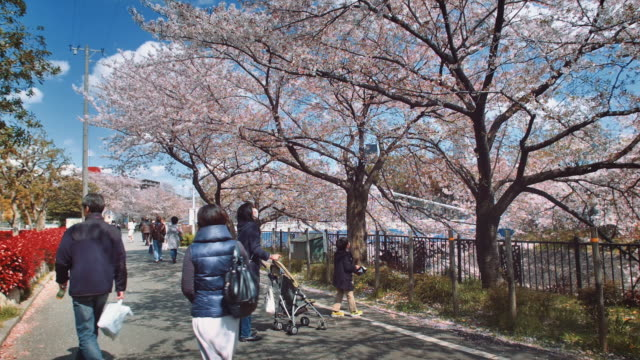 ws, young boy and his mother admiring cherry blossom, people walking by, yamazaki river, nagoya - 保護マスク点の映像素材/bロール