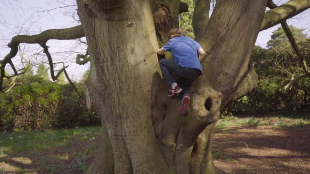 Young boy climbing tree