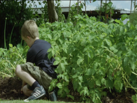 young boy digs the soil in a vegetable patch in his garden whilst his younger brother plays with a gardening glove - gardening glove stock videos & royalty-free footage