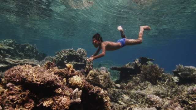 young boy dives to tropical reef, indonesia - tropical fish stock videos & royalty-free footage