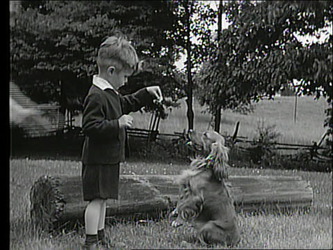 B/W young boy feeding treat to cocker spaniel outdoors