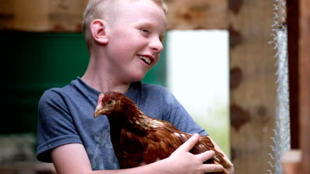 young boy holding a chicken - chicken coop stock videos & royalty-free footage