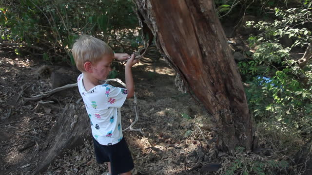 young boy in a forest pulling bark off of a tree - kelly mason videos 個影片檔及 b 捲影像