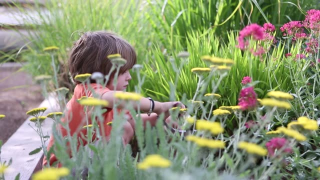young boy in garden cutting flowers - secateurs stock videos & royalty-free footage