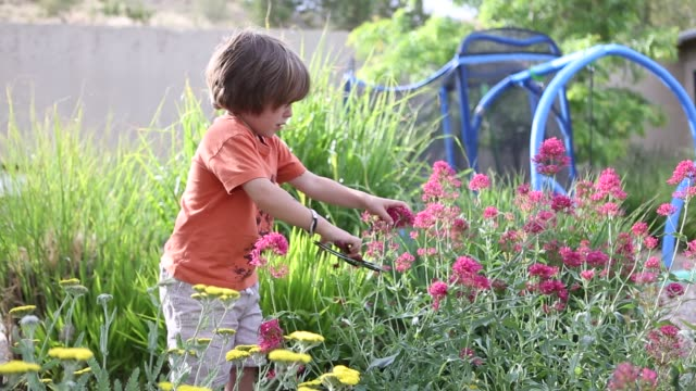 young boy in garden cutting flowers - pruning shears stock videos & royalty-free footage