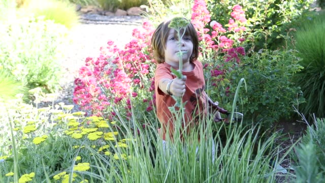 young boy in garden holding flowers - secateurs stock videos & royalty-free footage