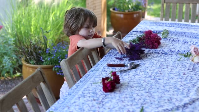 young boy in garden - pruning shears stock videos & royalty-free footage