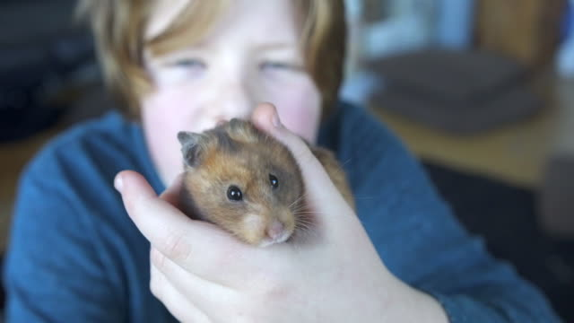 a young boy looking after his pet hamster - ペット点の映像素材/bロール