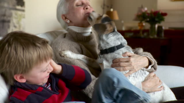 vídeos y material grabado en eventos de stock de ms zi young boy older women and dog paying on couch / stowe, vermont, united states  - lamer