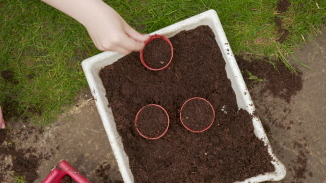 young boy planting seeds - plant pot stock videos & royalty-free footage