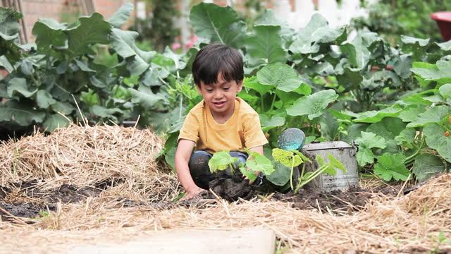 young boy planting vegetables in an organic garden - jungen stock-videos und b-roll-filmmaterial