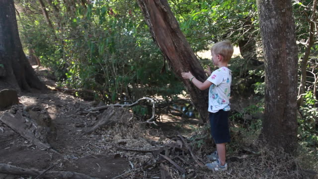 vidéos et rushes de young boy playing and holding onto a tree in the forest on a hot summer day - kelly mason videos