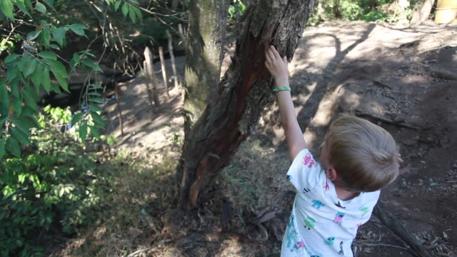 young boy pulling bark off of tree and breaking it with his hands. - kelly mason videos stock-videos und b-roll-filmmaterial