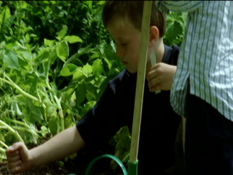 young boy shows his younger brother how to plant seeds in the vegetable patch in their garden - 注ぎ口点の映像素材/bロール