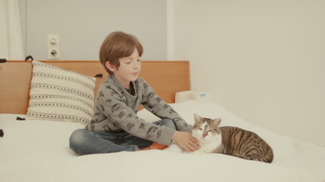 vidéos et rushes de young boy stroking cat on bed - young animal