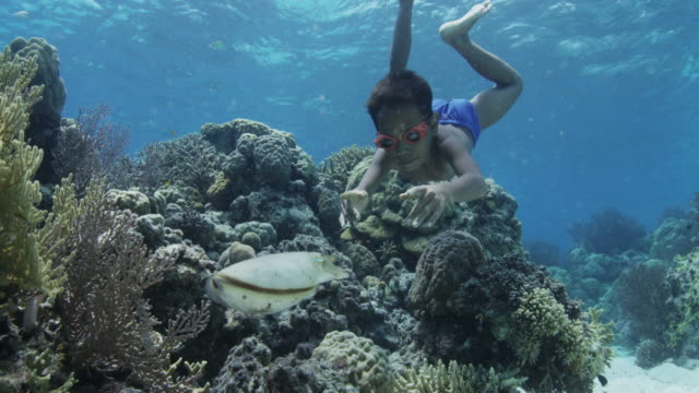 young boy swims after cuttlefish, indonesia - snorkelling stock videos & royalty-free footage