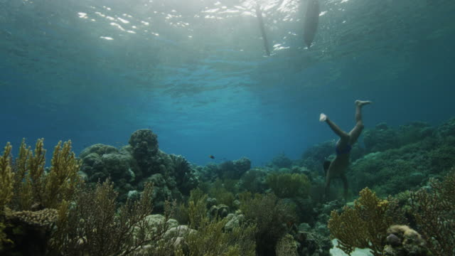 young boy swims in tropical reef, indonesia - tropical fish stock videos & royalty-free footage