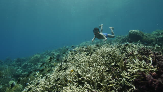 young boy swims over indonesian reef, pov - tropical fish stock videos & royalty-free footage
