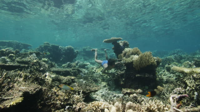 young boy swims through reef, indonesia - tropical fish stock videos & royalty-free footage