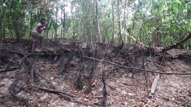 A young boy swing from a liana in a threatened forest near homes in the Imbiral quilombo which community members say is being heavily encroached upon...