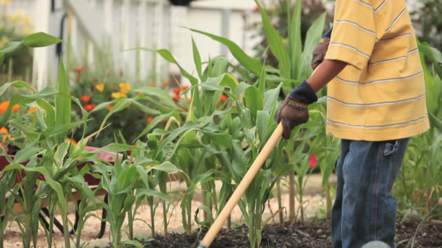 ms tu td young boy using hoe in vegetable garden / richmond, virginia - garden hoe stock videos & royalty-free footage