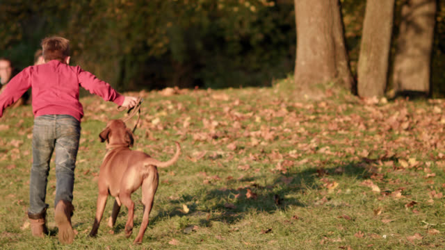 young boy walks a brown dog in a park on a sunny fall day - running up a little hill - shot-2