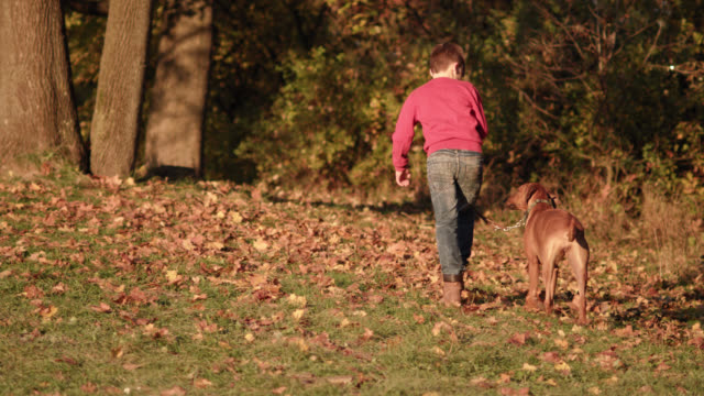 young boy walks a brown dog in a park on a sunny fall day - walking up a little hill - shot-1 - children only stock videos & royalty-free footage