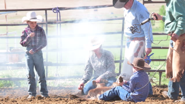 young boy watches as his friend helps hold steer down for branding - cattle stock videos & royalty-free footage