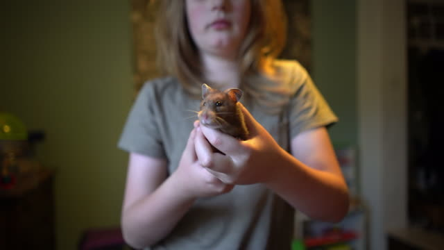 a young boy with his pet hamster. - long hair stock videos & royalty-free footage