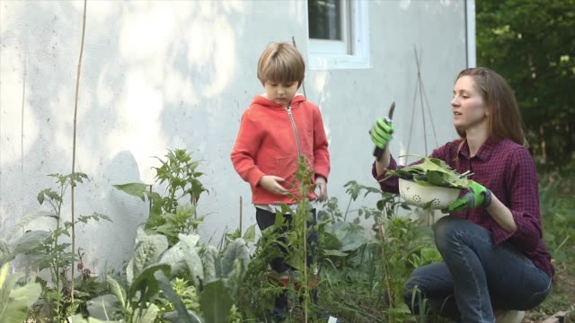 young boy with mother sustainable gardening homegrown produce in vegetable garden - vegetable garden stock videos & royalty-free footage