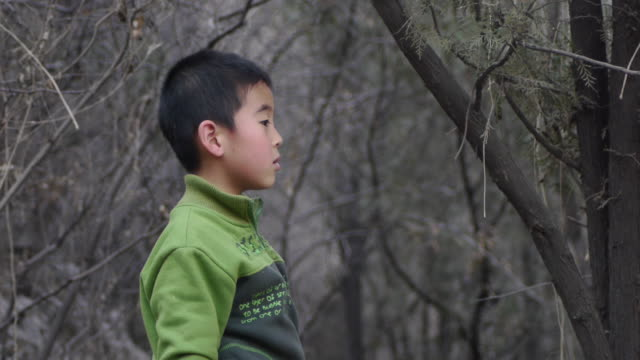 young boys in the woods - oblivious stock videos & royalty-free footage