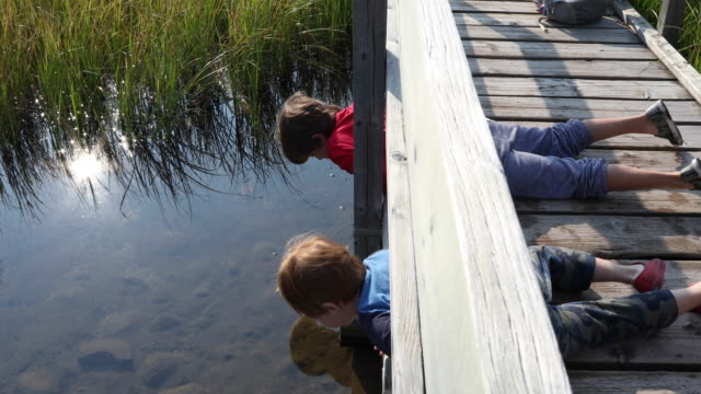 young boys look for natural treasures, in mountain creek - grass family stock videos & royalty-free footage