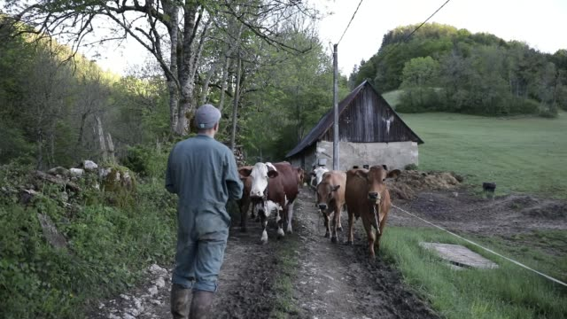 young cattle breeder florentin chambon continues to work in the chartreuse mountain range during the lockdown period on may 4, 2020 in... - pasture点の映像素材/bロール