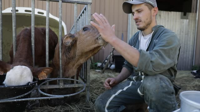 young cattle breeder florentin chambon continues to work in the chartreuse mountain range during the lockdown period on may 4, 2020 in... - young adult stock videos & royalty-free footage