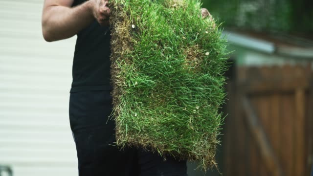 vídeos de stock e filmes b-roll de a young caucasian man wearing casual clothing lays a square of sod grass side down onto muddy soil in a residential backyard - relvado terra cultivada