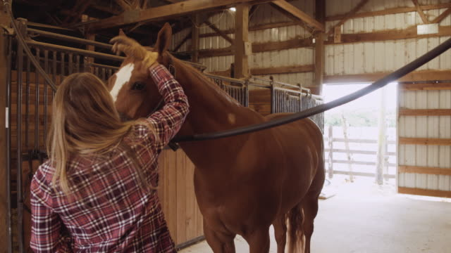 Young caucasian woman petting horse in stable