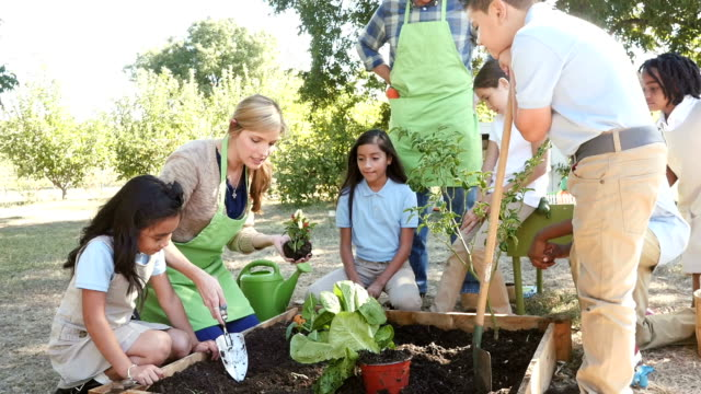 A young Caucasian woman teaches elementary students how to plant pepper plant