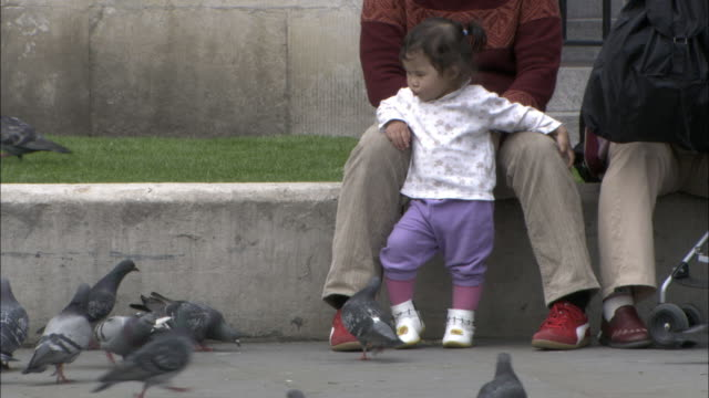 Young child watches pigeons in Trafalgar Square, London, UK