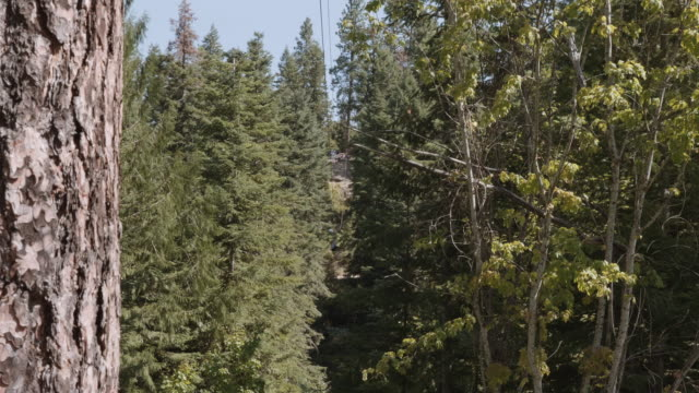 UHD 4K: Young child zip lining through the forest during a vacation