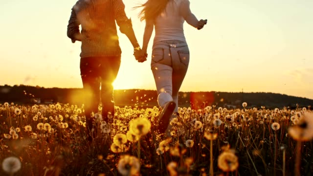 slo mo young couple among dandelions at sunset - romantic activity stock videos & royalty-free footage