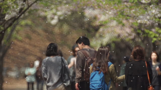 A young couple and people walking on a cherry blossom tree-lined street in Yonsei university campus