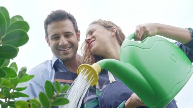 young couple arranging and watering together very smiling the garden of their house. (slow motion) - watering can stock videos & royalty-free footage