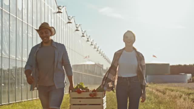 vídeos de stock, filmes e b-roll de slo mo jovem casal carregando uma caixa cheia de vegetais frescos - satisfação