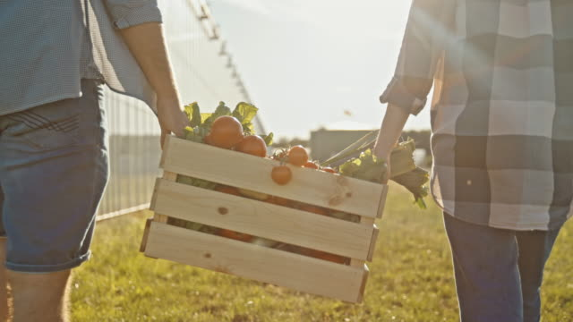 slo mo young couple carrying crate full of fresh vegetables - tomato stock videos & royalty-free footage
