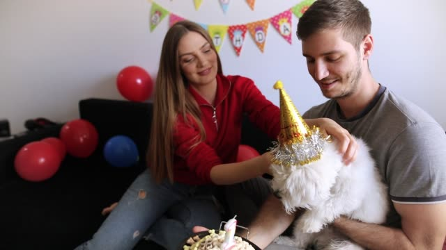 young couple celebrating pet birthday. maltese dog birthday party - party hat video stock e b–roll